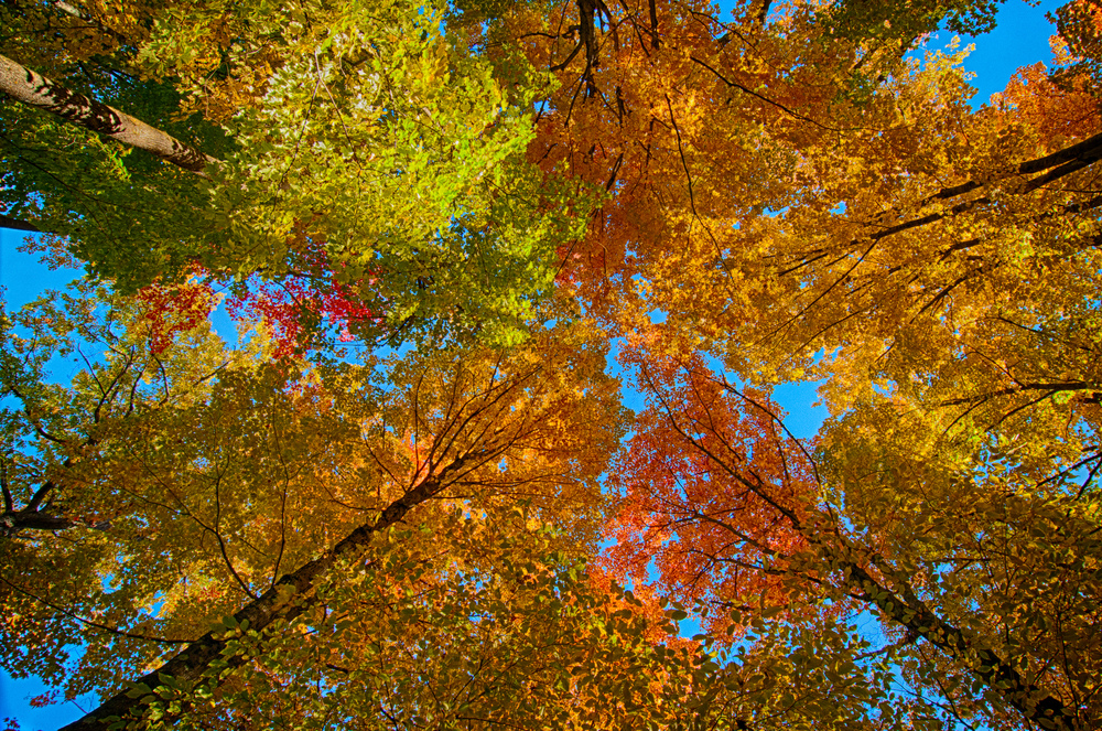 Fall Colors (181 of 190)_HDR-16.jpg