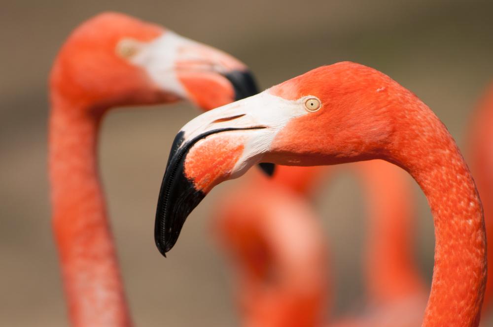 Vilas Zoo (150 of 300)-22.jpg