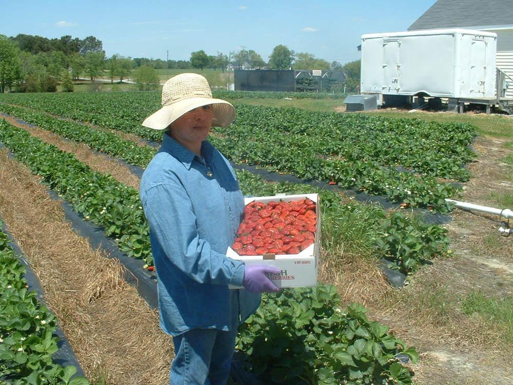 2005 strawberry flat 001.jpg