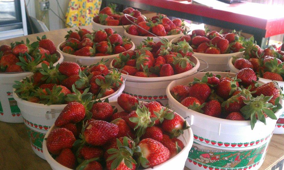 strawberrybuckets.jpg
