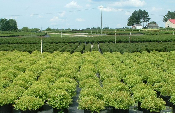 plantsnursery.jpg