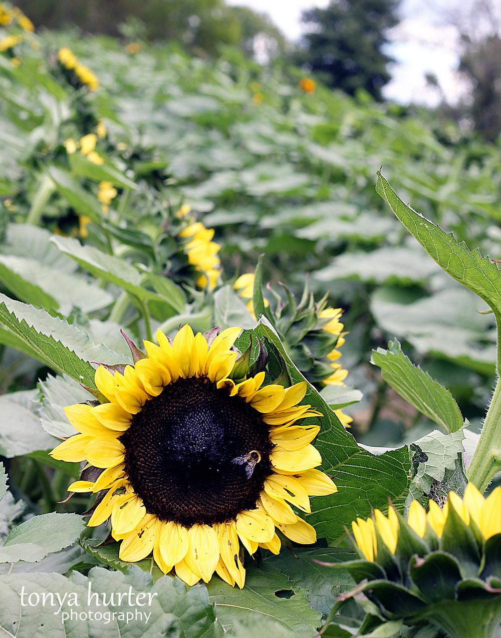 SN Flowers 4.jpg
