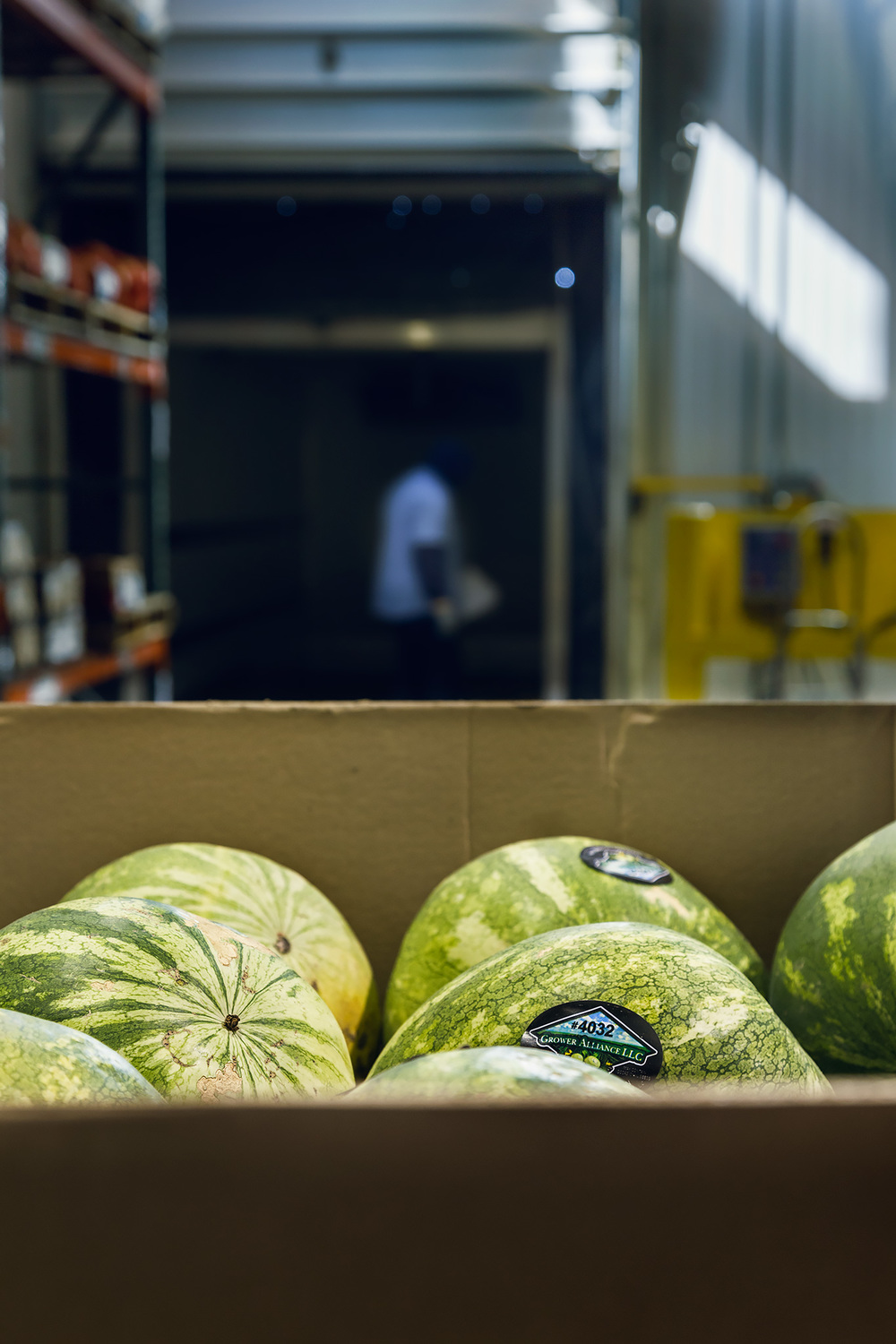 Watermelons in Waiting
