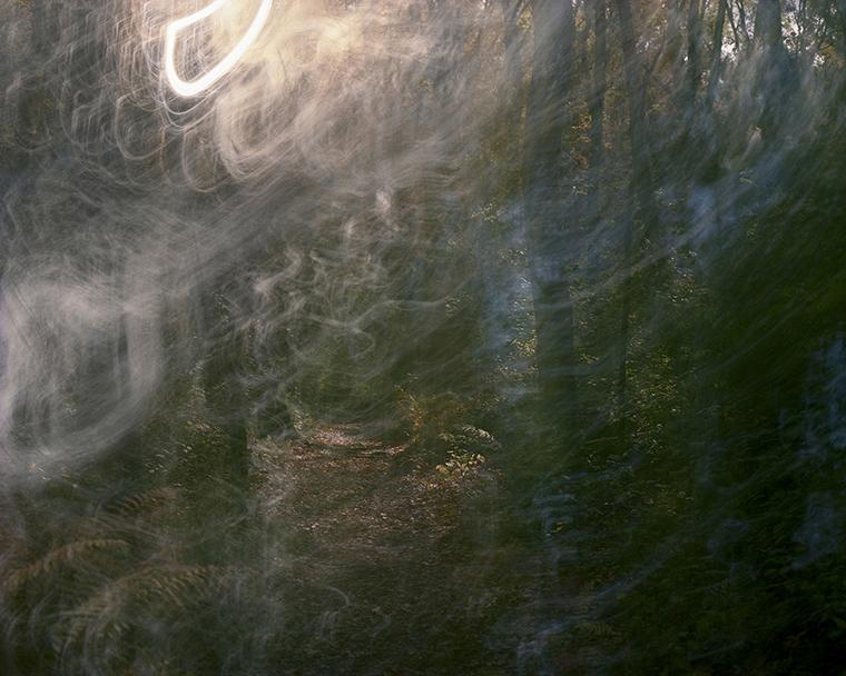 Walden Woods, Autumn