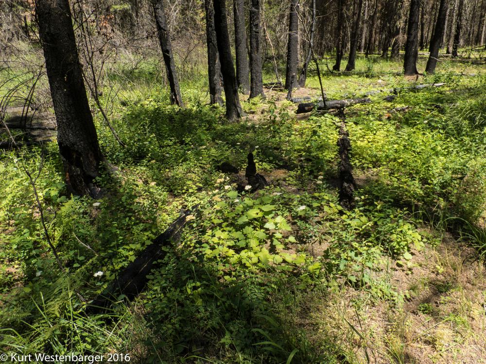 160613_Selway River Trail_088.jpg