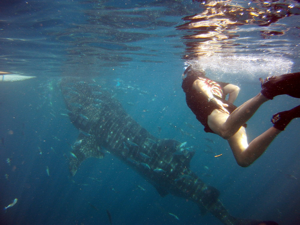 Monica with a whale shark