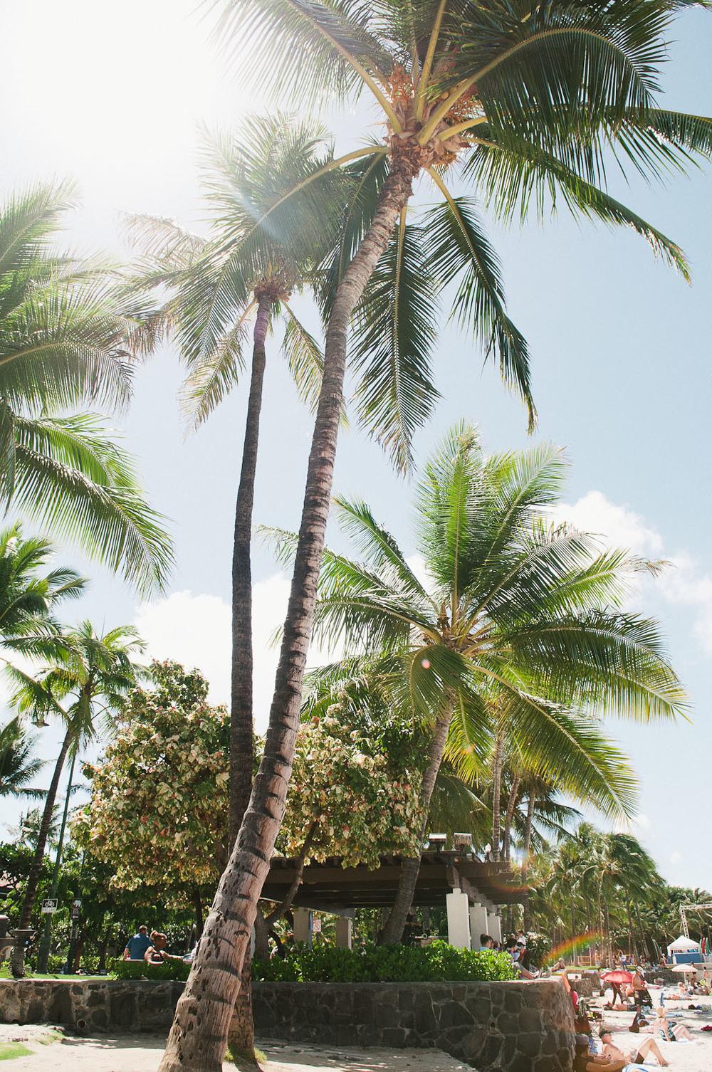 hawaii2013_1.jpg