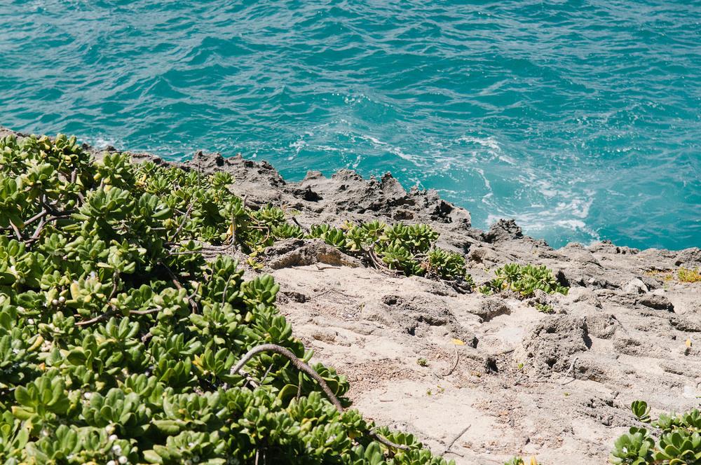hawaii2013_68.jpg