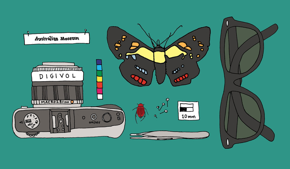 Identity for Digital Volunteers, The Australian Museum