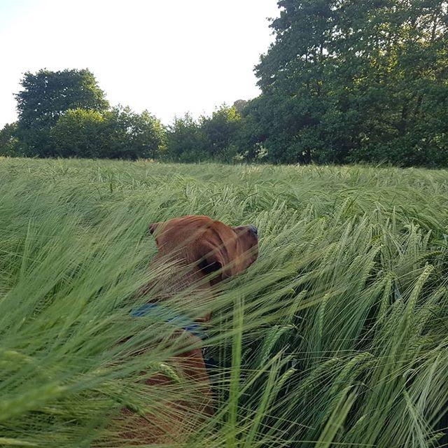 #dog # barley #nofilter #plumpton
