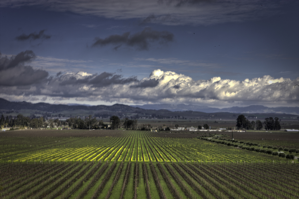 Here is a high Dynamic Image from Gloria Ferrer winery in Carneros in Sonoma