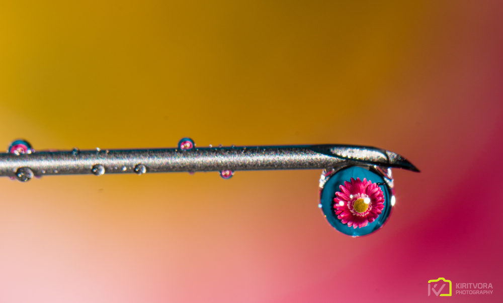 A pink Daisy held in front of a teal T shirt behind the drop on a needle