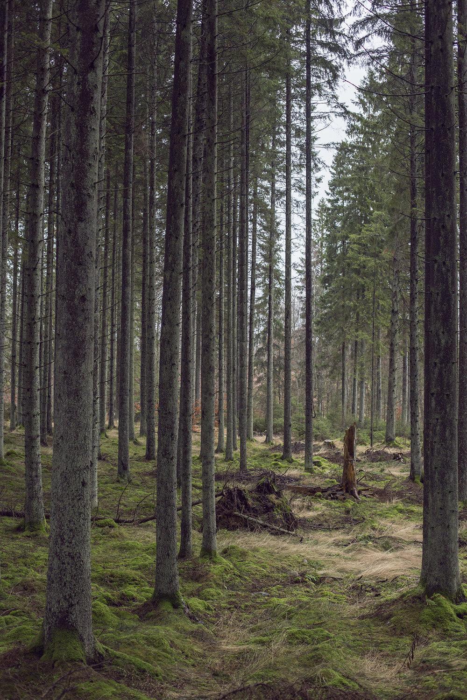 Sverige BOG00007.jpg