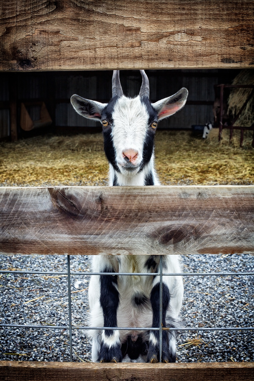 boston animal photography.jpg