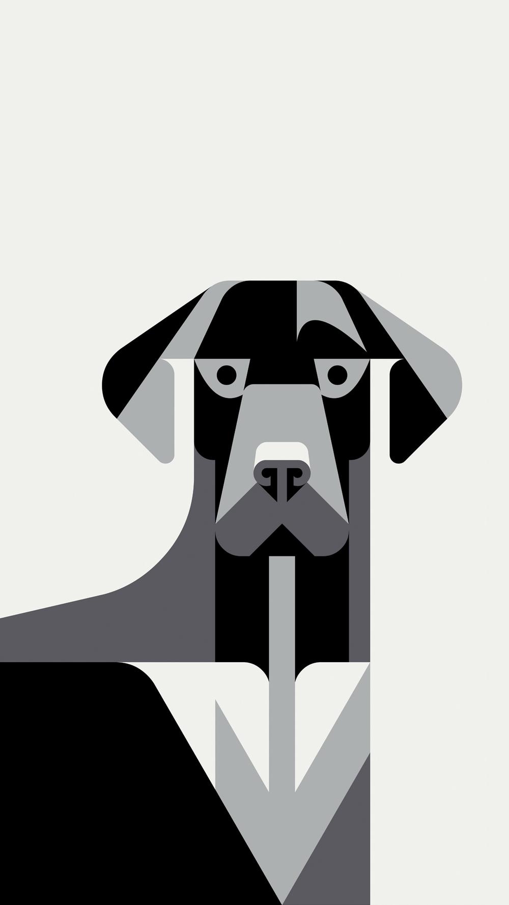 LabradorPortrait_Wallpaper_JoshBrill.jpg