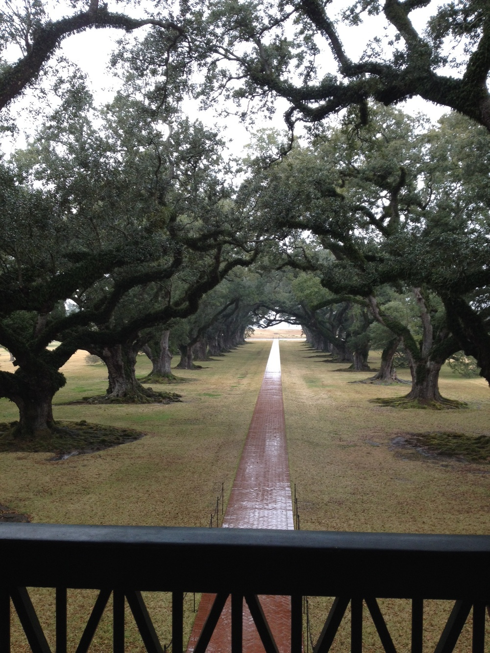 The view of Oak Alley's 300 year old trees from the second story of the plantation.