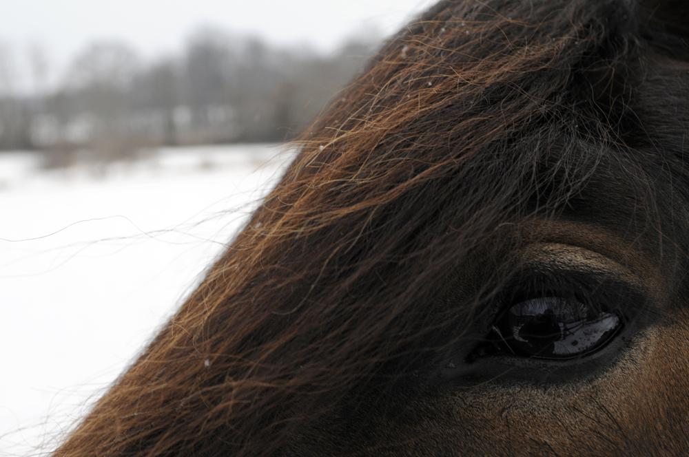 Snow Pony - 8 Jan 2011