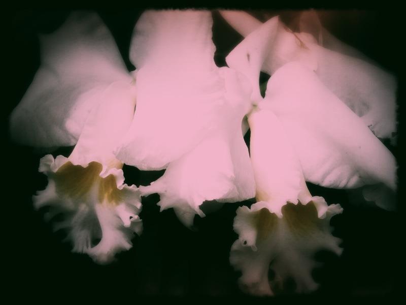 Longwood Orchids - Mobile Photos