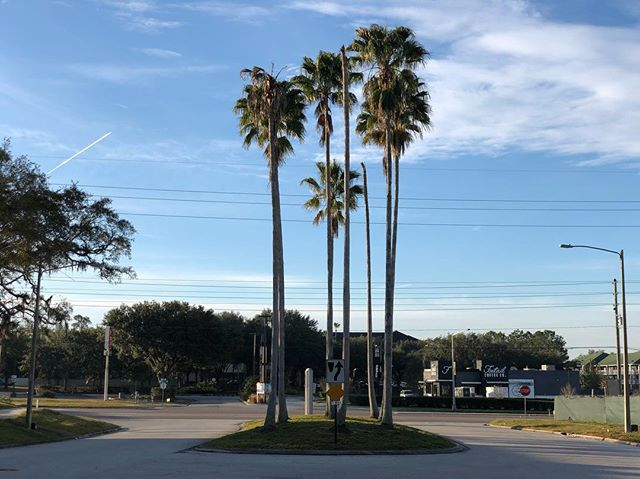 The weather has been amazing the past two weeks here in Orlando. I've enjoyed scenery like this each day on my morning walks. Blue sky and palm trees are always amazing, regardless of where you are I think. #earlymorningwalk #orlando #florida #shotoniphone #iphonex #grateful #gratitudejournal