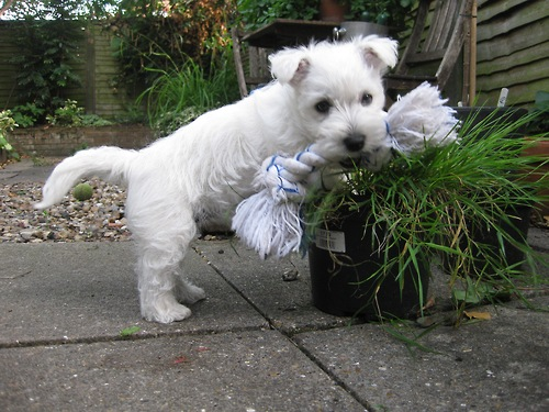 If I can just get rid of this grass it will be the perfect hiding place for my toy.