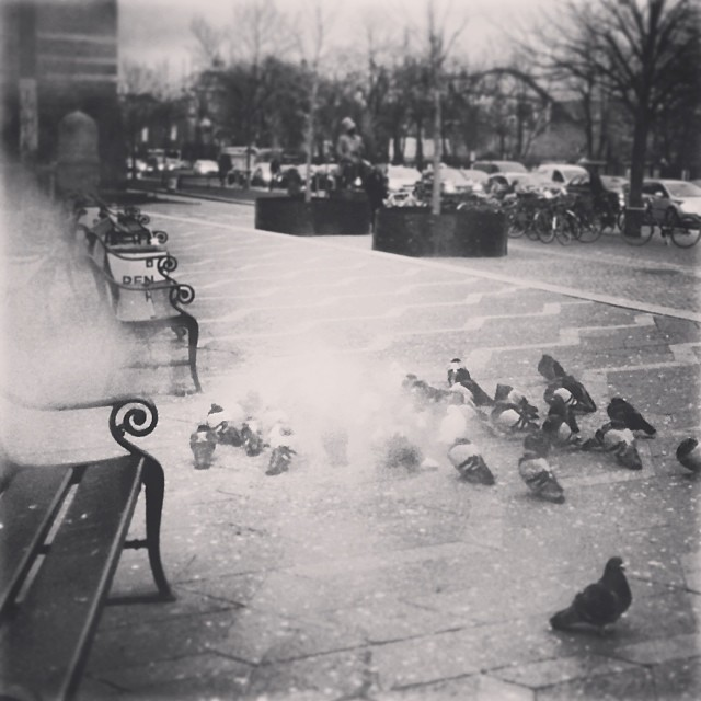 #copenhagen #pigeons know how to deal with the #cold - find a #steamvent - #igblackandwhite #insta_bwgramers