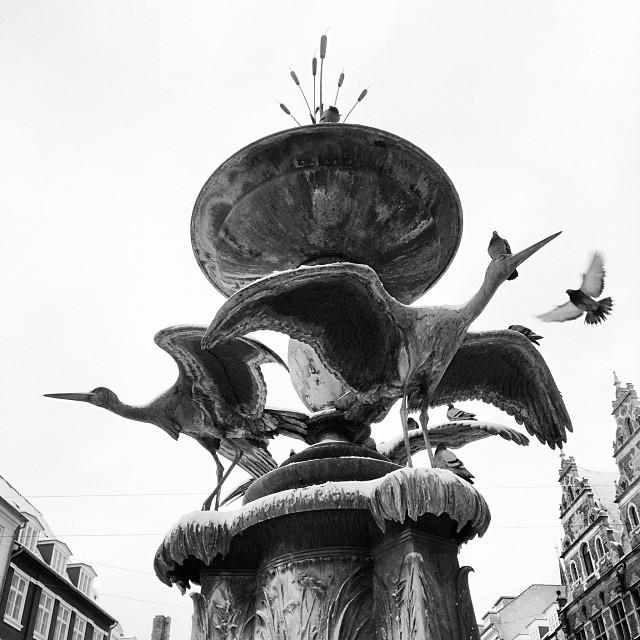 Surprised these #pigeons aren't #freezing to the statue #copenhagen #winter #snow