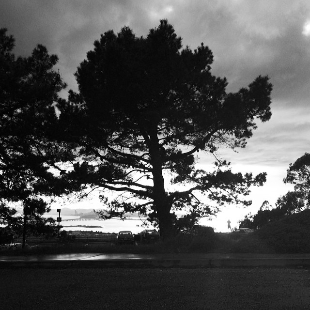 Everyone stopped to admire the #light this #evening - #trees #backlight #vista #shadow #blackandwhite #insta_bwgramers