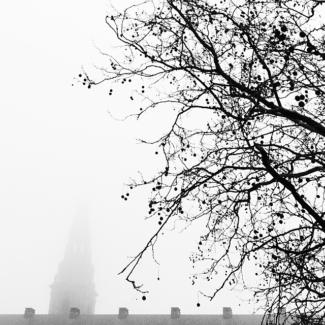 Grey day in #copenhagen - #tree #christiansborg #blackandwhite