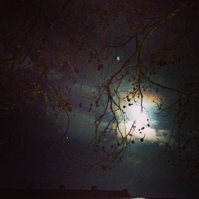 #moon #branches #rooftops - #torvaldsenmuseum #copenhagen