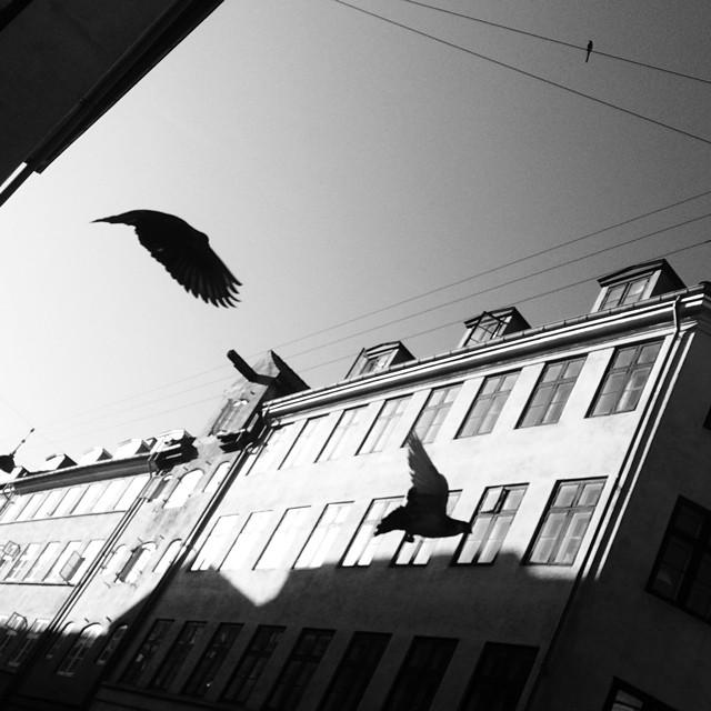 More evil doers - #skyrats #pigeons #snarens #copenhagen #blackandwhite #birds #silhouette