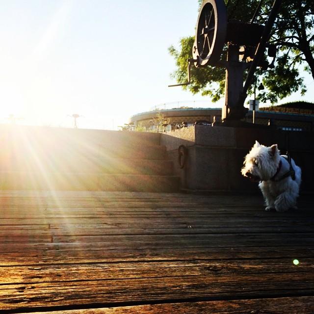 #moomin the #dockside #westie - #summer #copenhagen