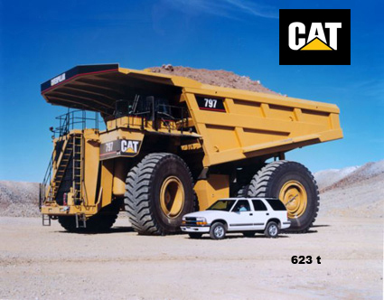 cat797 .jpg