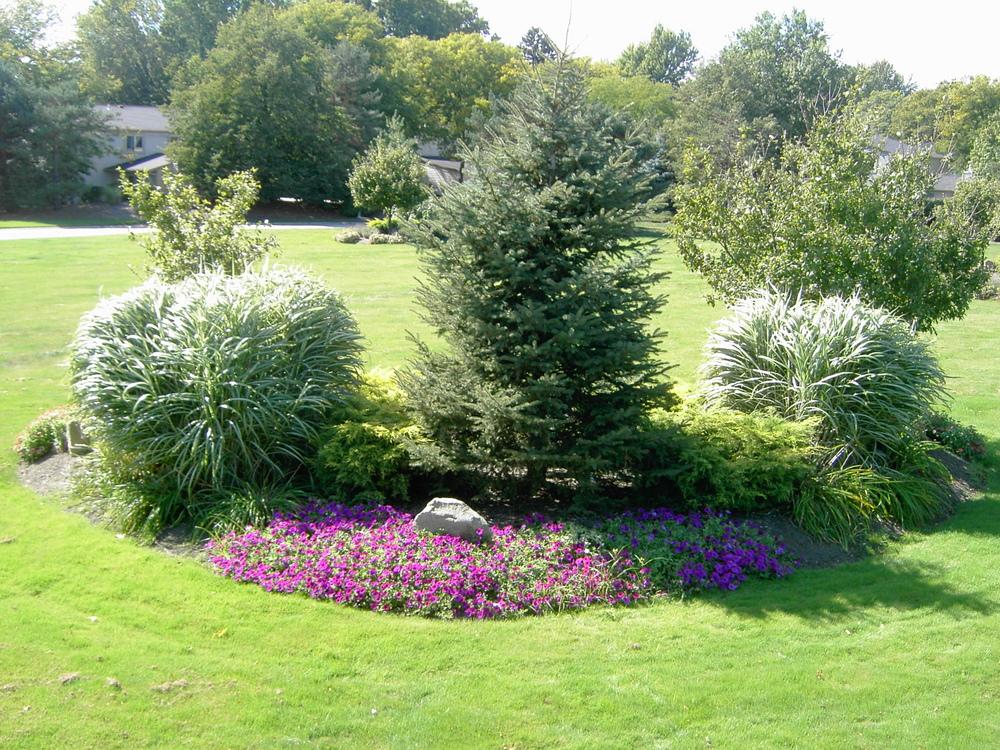 Plantings (4).jpg