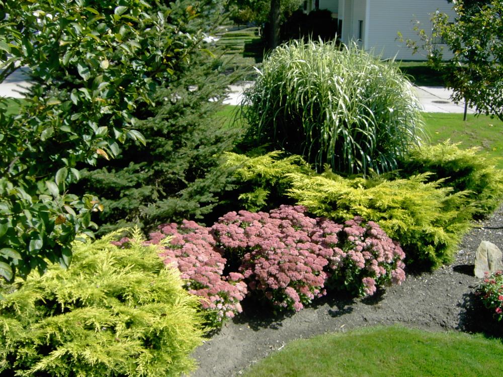 Plantings (6).jpg