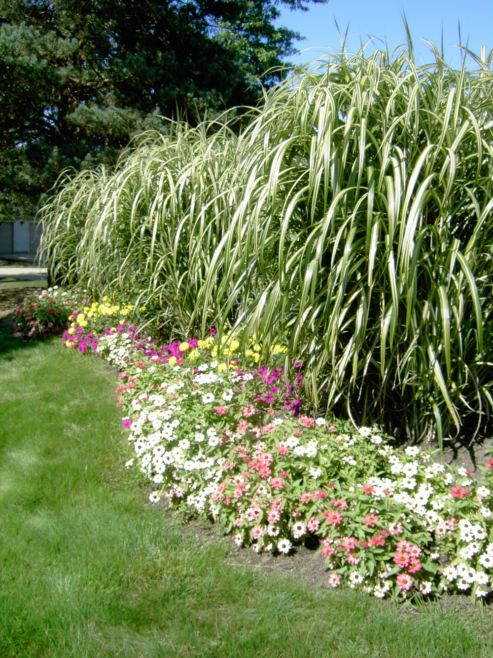 Plantings (8).jpg
