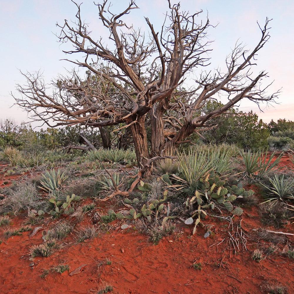 desert-Tree-sm.jpg