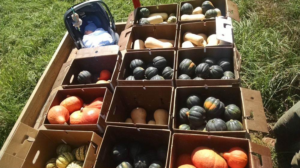 Frank oversaw the squash haul this year.