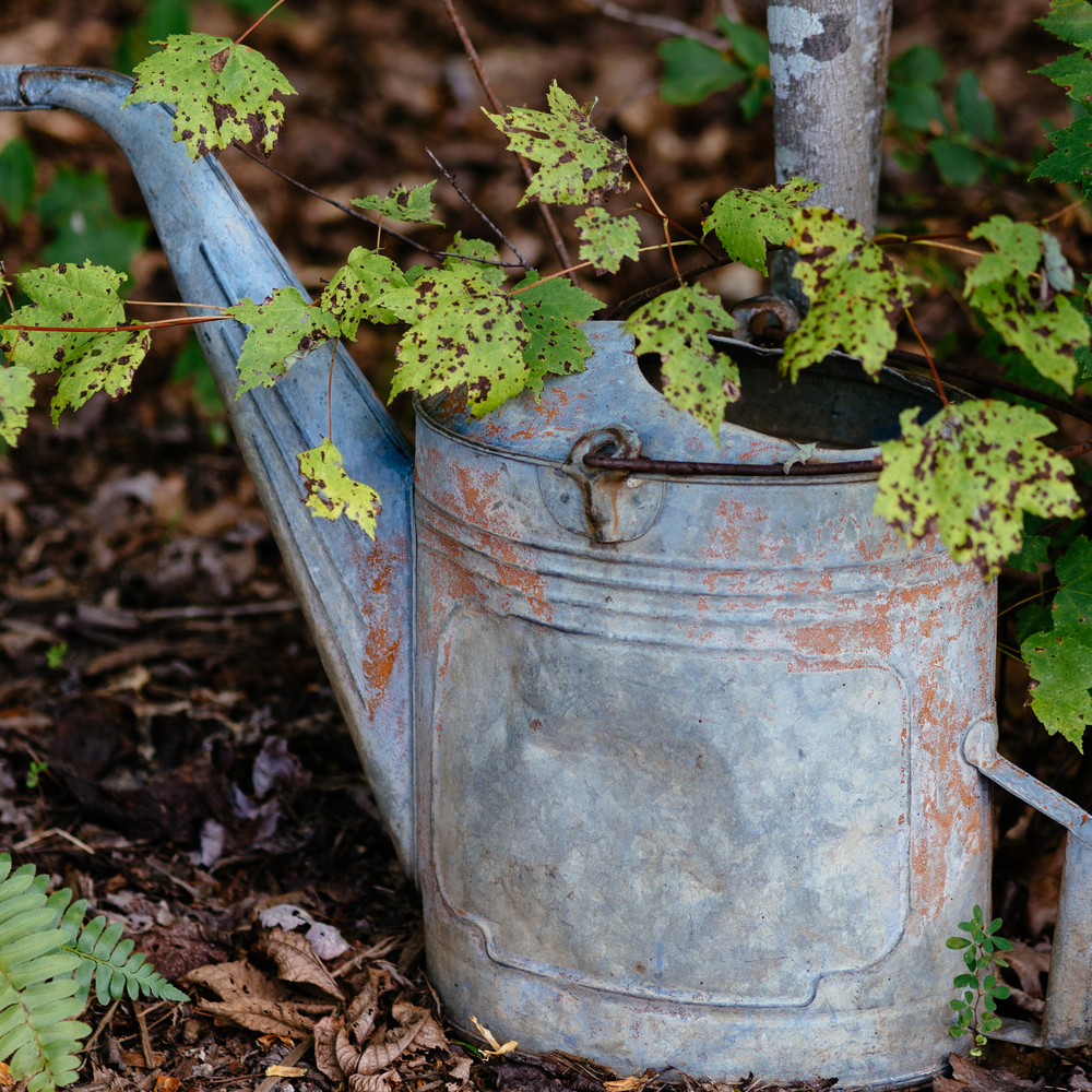 Watering Can - Olympus OM-D E-M5, 75mm, f/2.0, ISO 200, 1/400sec