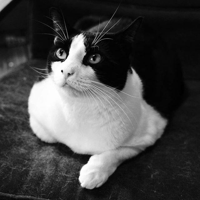 Dash  #cats #pet #pets #fujifilm #fujixpro2 #7artisans25mm