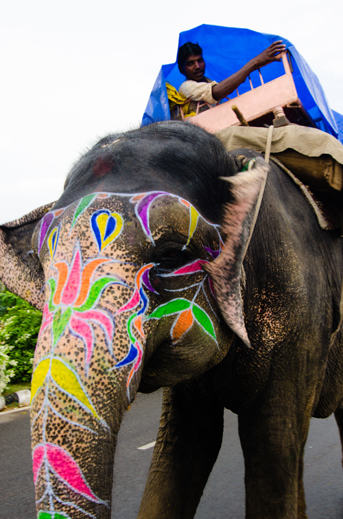 A painted elephant and his mahout (under his tarpaulin) meandering down the road