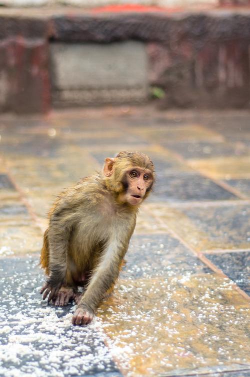 Kathmandu_3-22.jpg
