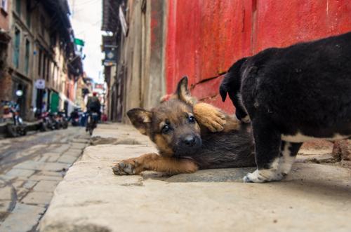 Kathmandu_3-70.jpg