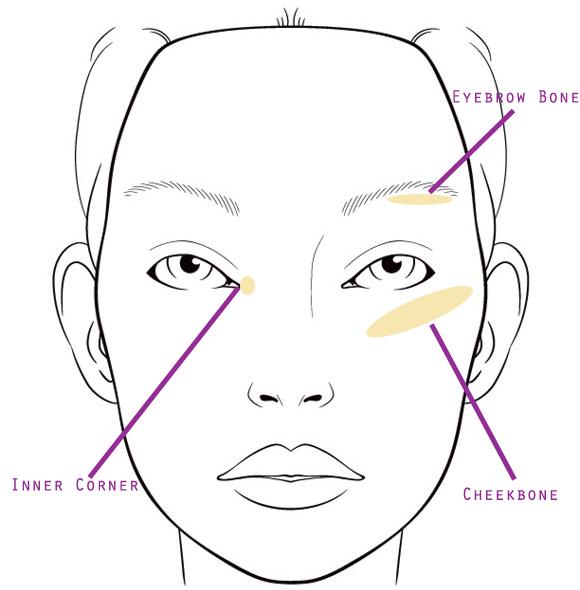golden highlight face chart.jpg