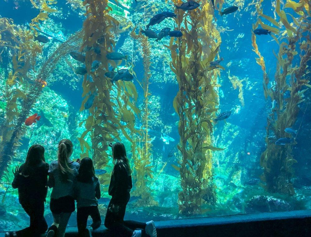 Photo taken by  https://lajollamom.com/guide-to-birch-aquarium/