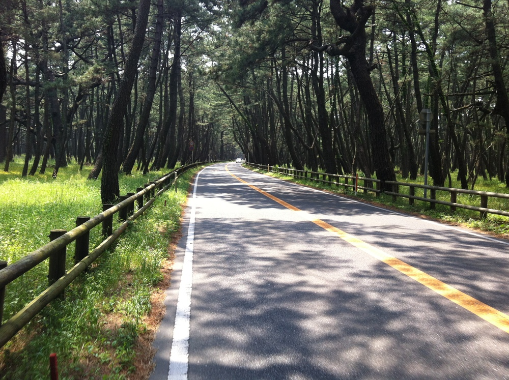 Fantastic forest preserve near Karatsu. Would've been a great place to camp.