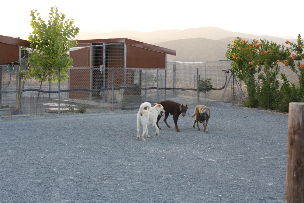 dog_ranch_limassol_dog_hotel_06.jpg