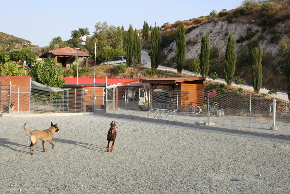 dog_ranch_limassol_dog_hotel_08.jpg