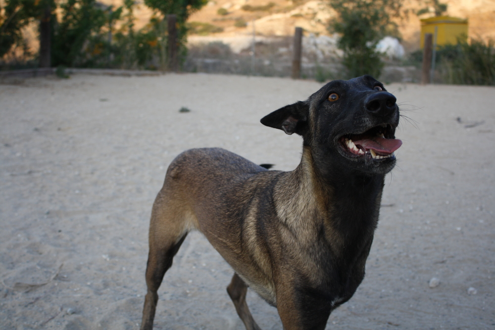 dog_ranch_limassol_dog_hotel_023.jpg