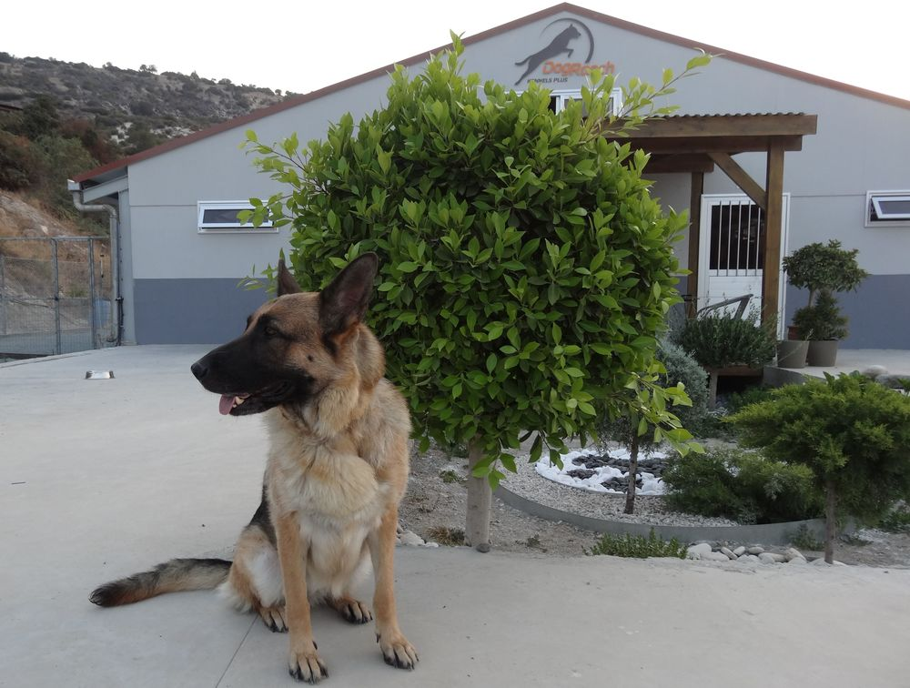 dog_ranch_cyprus_dog_hotel_era.jpg