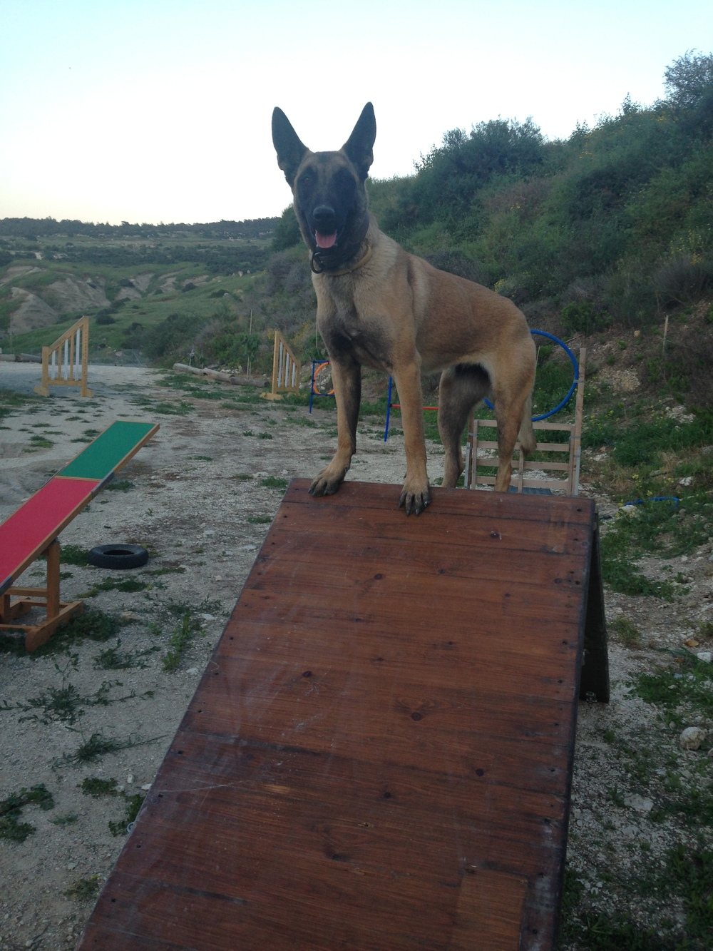 dog_ranch_cyprus_dog_hotel_agility_Tara2.JPG